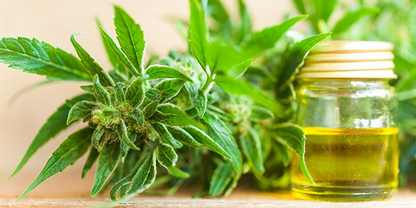 CBD Oil Best Practices for Beginners