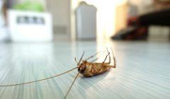 Pest Control Calgary